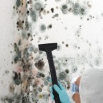 Black-Mold-Remediation-Los Gatos