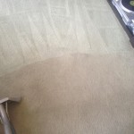 Carpet-Cleaning-Los Gatos