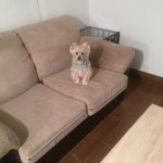 Los Gatos-Sofa-Pet-Stain-Cleaning