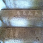 Los Gatos-Stairs-Carpet-Cleaning